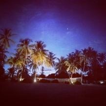 Palmen im Mondlicht