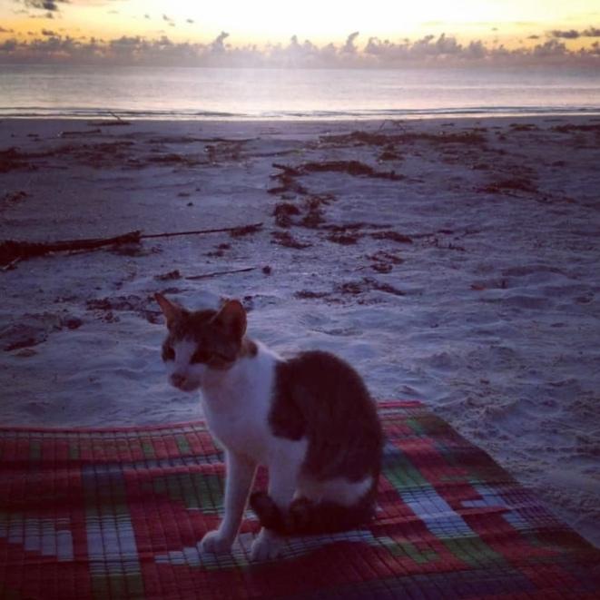 Abendprogramm einer Katze auf Zanzibar