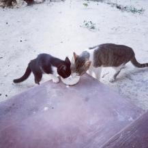 So ein Hundeleben 😉- Quarantäne Sansibar