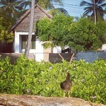 Jambiani Sansibar - Ruhig zu Corona Zeiten